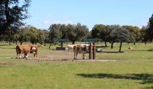 Beberos y comederos en La Finca de Calzada de Oropesa_web