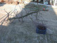 Retos en la sanidad vegetal del olivar andaluz