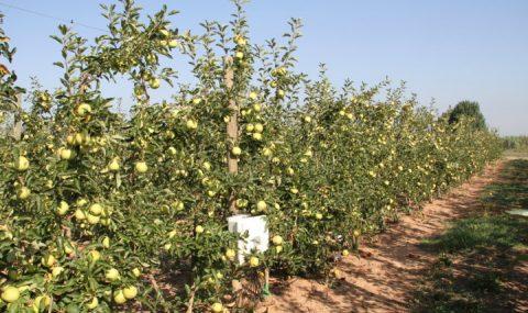 Diagnóstico nutricional en manzano