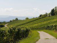 Arranca el proyecto EnerTool para la reducción del consumo energético en redes de riego a presión en viñedos