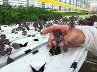 Urban Farmers: producir tomates y peces en la azotea