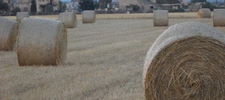 Paja de trigo, componente en baterías de litio