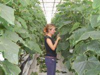 Tecnova abre la Bolsa de Empleo de 2018 a perfiles innovadores en el sector agroalimentario
