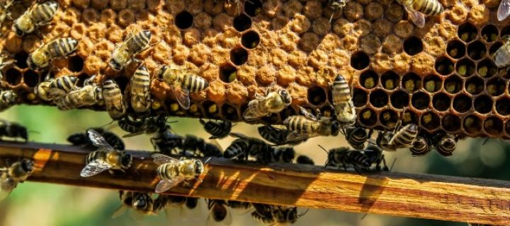 Ayudas para I+D+I aplicada en apicultura