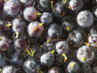 Cómo cambia la uva por el hongo Botrytis cinerea