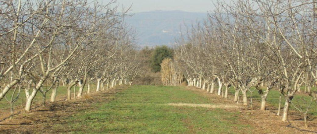 España: Retos de futuro de los frutos secos