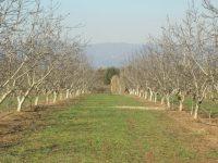 Retos de futuro de los frutos secos