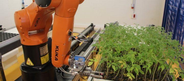 El primer robot para injertos hortícolas
