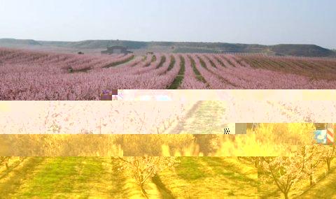 Principales sistemas de formación en el olivar en seto