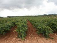 Aplicaciones de la visión artificial en viticultura