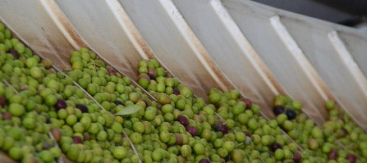 Economía circular en los residuos del olivar