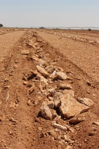 El suelo tiene una capa petrocálcica que hay que romper para que los cultivos puedan tener buenas producciones (FILEminimizer)