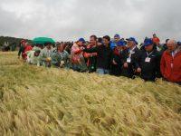 Las cebadas híbridas de seis carreras de Syngenta comienzan en septiembre su andadura española