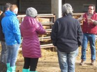 Diálogo hispano-italiano para vacuno de carne