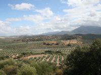 La tradición familiar del aceite de oliva
