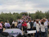 Tres años consecutivos sin vecería con la estrategia de Syngenta para olivar