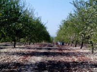 Almendrera del Sur promueve un crecimiento ordenado del cultivo en Andalucía
