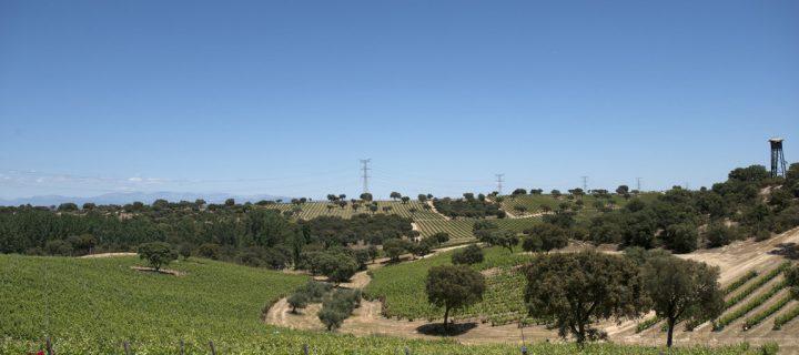 Valquejigoso, una apuesta por la biodiversidad y la integración del viñedo en el entorno natural