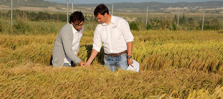 Combinaciones de cultivos más rentables