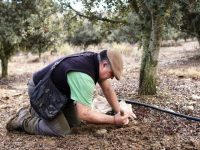 Chema Turmo, ejemplo de truficultura profesional en la comarca oscense de la Ribagorza