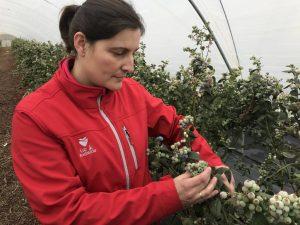 Patricia Aguilar examina calibre del fruto