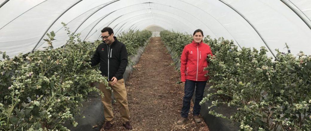 Fruta de Andalucía emplea microalgas para bioestimular arándanos