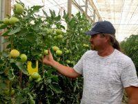 Indalecio Amat, alto rendimiento en hortícolas de invernadero