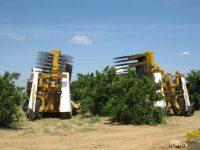 Recolección mecanizada del cultivo de cítricos, una alternativa de futuro