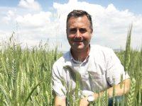 Tritordeum, un cultivo sostenible alternativo, pero rentable
