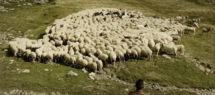 Cómo producir carne sostenible en los Pirineos