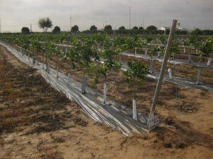 Detalle del empleo de estructuras para la formación de la línea de plantación.