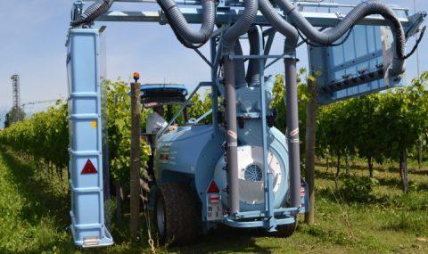 Control de plagas y enfermedades del viñedo
