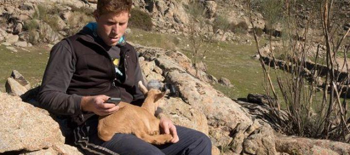 Tecnología móvil para proteger al ganado