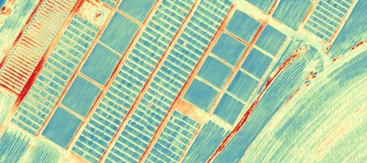 Nuevas variedades de trigo harinero resilientes a la sequía y el cambio climático