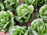 Primaflor, control integral desde la semilla hasta la comercialización