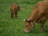 Método para reducir las emisiones de metano