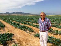 Coliflor, alternativa al tomate en el Levante almeriense