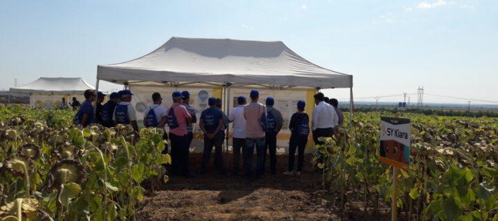 Syngenta muestra en Valladolid el potencial productivo de su catálogo de girasol