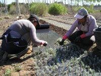 Agricultura convoca subvenciones para impulsar el papel de las mujeres en el desarrollo rural