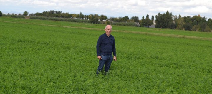 El cultivo de alfalfa, técnica y precisión para obtener rentabilidad