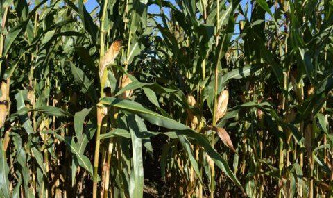Bioraise, una plataforma para la evaluación de la biomasa residual en España