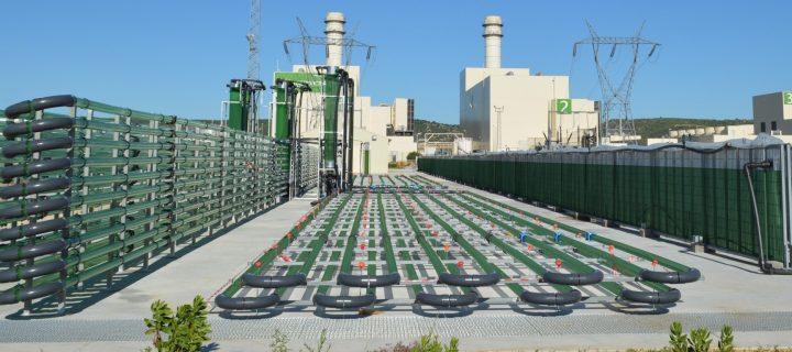 AlgaEnergy y Yokogawa firman un acuerdo para impulsar el crecimiento del sector biotecnológico de las microalgas
