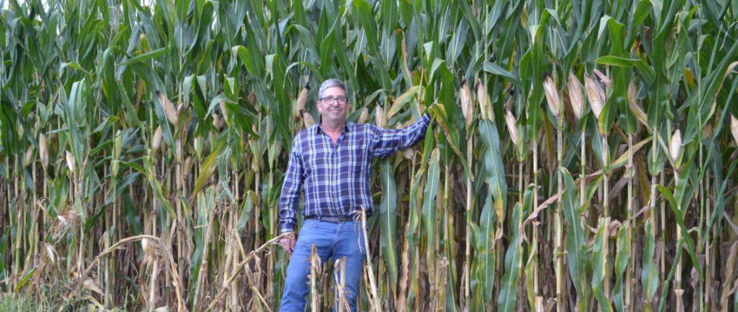 Agripurza cierra el ciclo cultivando maíz para obtener litros de leche