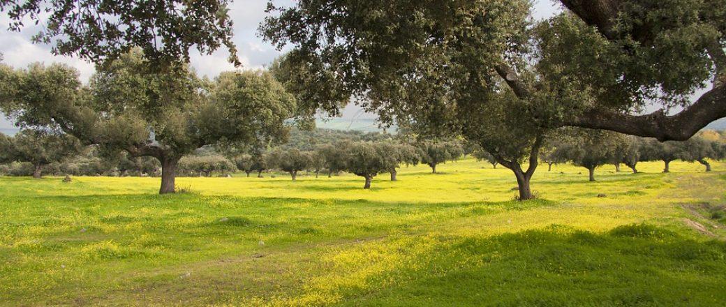 El Grupo Operativo GoDehesa favorecerá el manejo del ganado en la dehesa