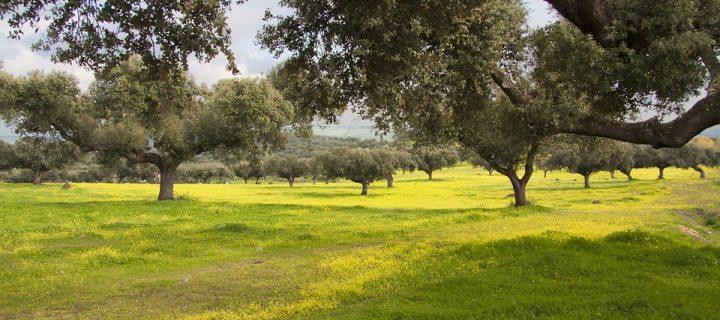 Cicytex prepara un webinar sobre la gestión de pastos de la dehesa