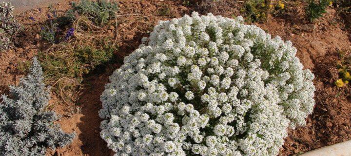 Syngenta presenta Operación Polinizador para invernaderos