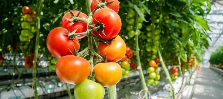 El MAPA aprueba ayudas para 22 proyectos de innovación agroalimentaria y forestal