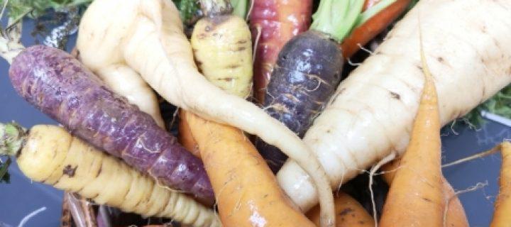 CarrotDiverse, un proyecto europeo para la mejora del cultivo de la zanahoria