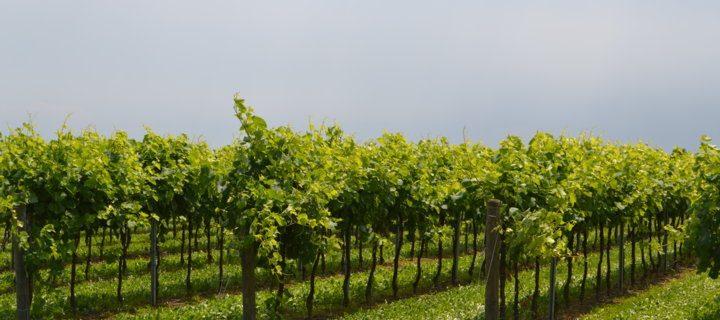 Innovaciones en maquinaria para viticultura