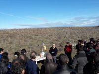 Buenas Prácticas Agrícolas en el manejo del suelo y el agua en el cultivo de la viña